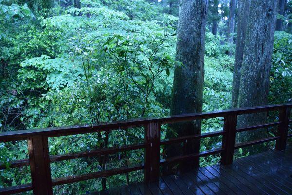 「箱根・翠松園」の部屋から見た景色