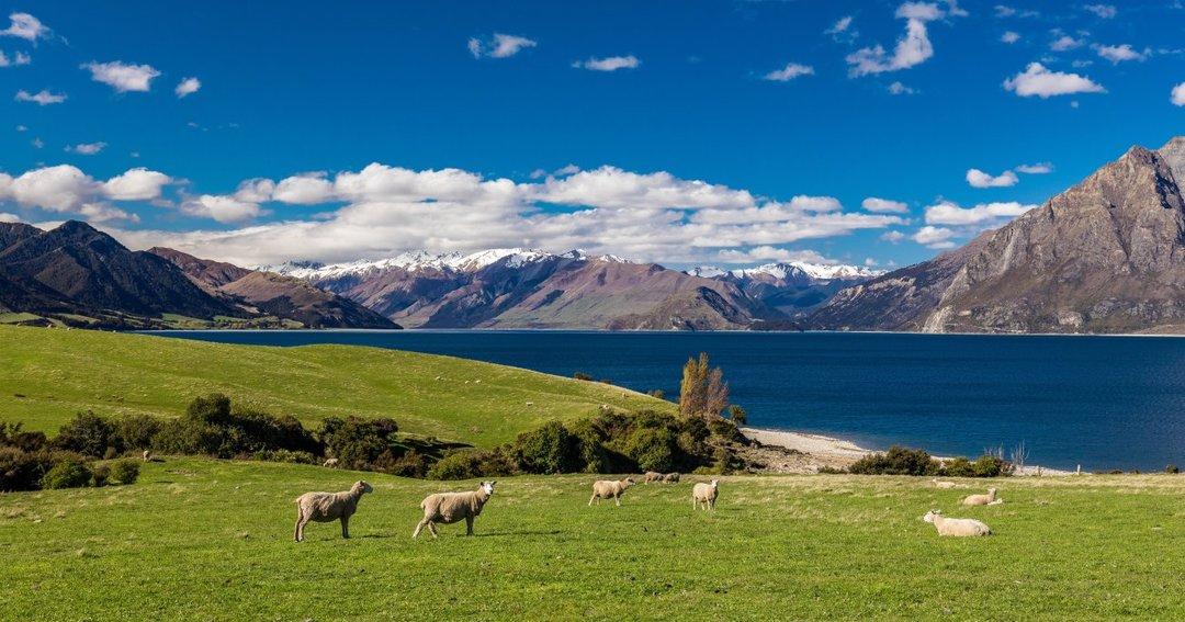 日本が学ぶべき「ニュージーランドのすごい農業」とは?