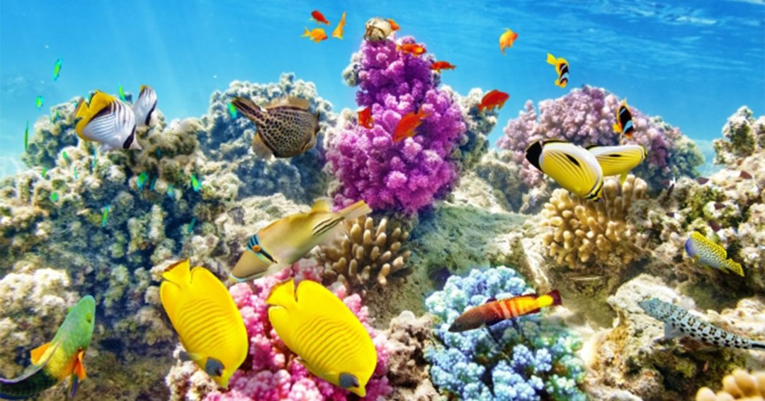 まもなく夏本番! 美しい珊瑚礁が広がる海に飛び込みたい