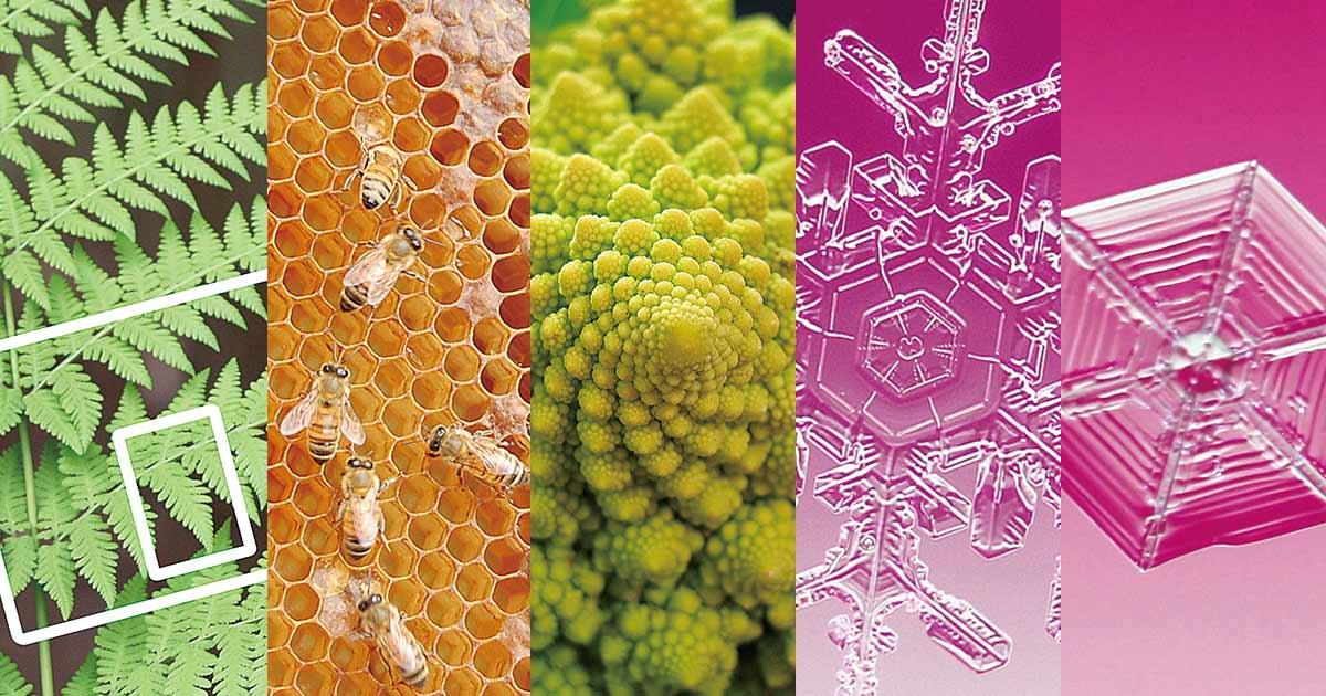 自然の中にある「美しい数学」の世界、シダの葉、雪の結晶…