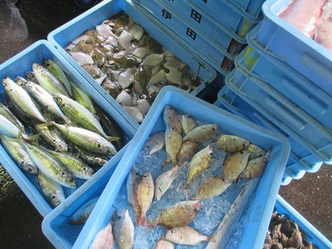 実は今も魚の宝庫!大阪は漁業が盛んな街だった