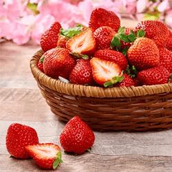 フルーツソムリエが選んだ「春あまおう」4パック(1kg)