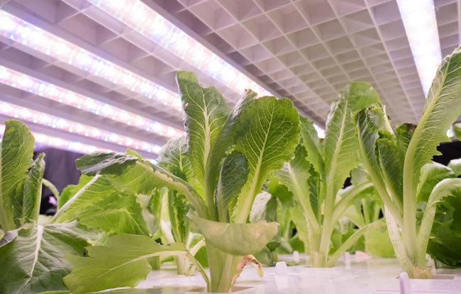 野菜工場から野菜を調達するコンビニが増え始めた