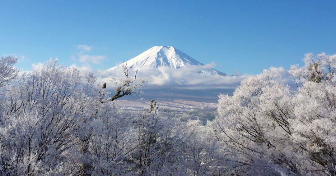 忍野村の霧氷と富士山