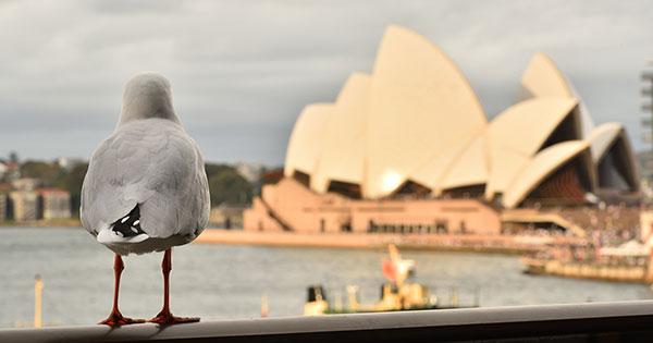 中国マネーが引き金に、オーストラリアで大規模スト未遂事件