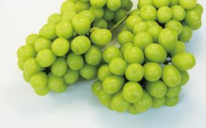 「中村柿ぶどう園 シャインマスカット2kg」がもらえる「福岡県うきは市」