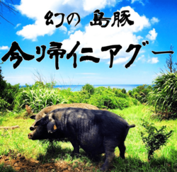 産直『今帰仁アグー』 まるごと1頭(約31kg)