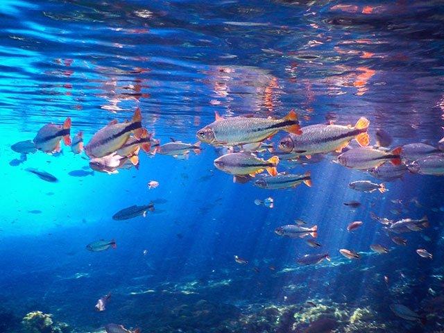 通称「天然水族館」。ハイシーズンは夏の12~2月