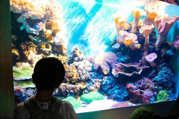 ワイキキ水族館の内部
