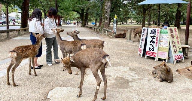 大仏と鹿だけ?魅力度ランキング7位なのに敬遠される奈良の問題とは