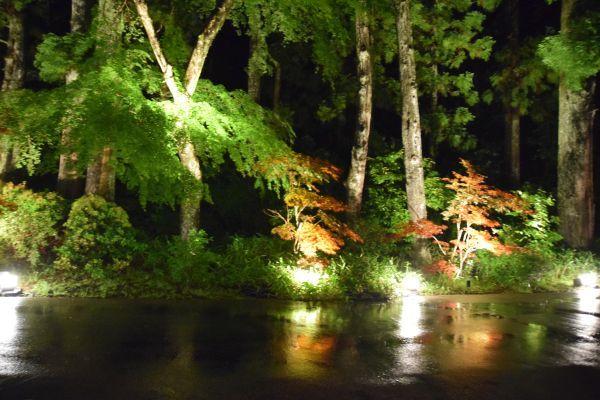 「箱根・翠松園」の部屋から見たライトアップされた景色