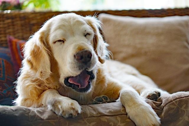 のび太もびっくり!?条件反射的に眠れる「即寝」の技術