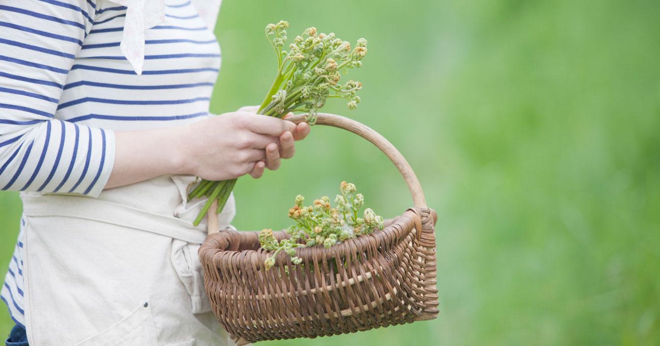 「山菜採り」を始めるには?知っておきたいマナーや危険回避の基本