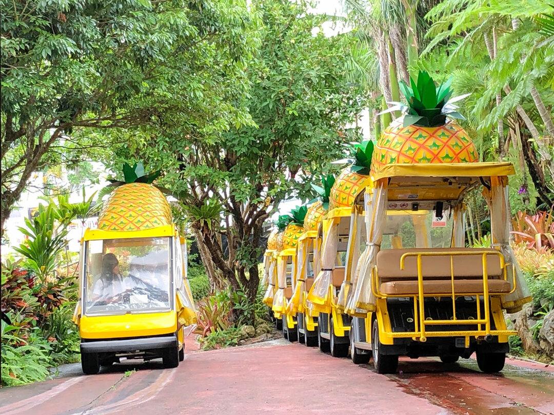 名護パイナップルパークには約30台の自動運転ランドカーを配備。