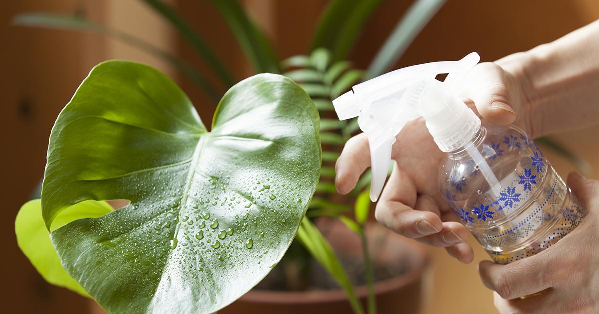 評価も年収もアップしないのに、入社以来20年、観葉植物に水をあげる理由