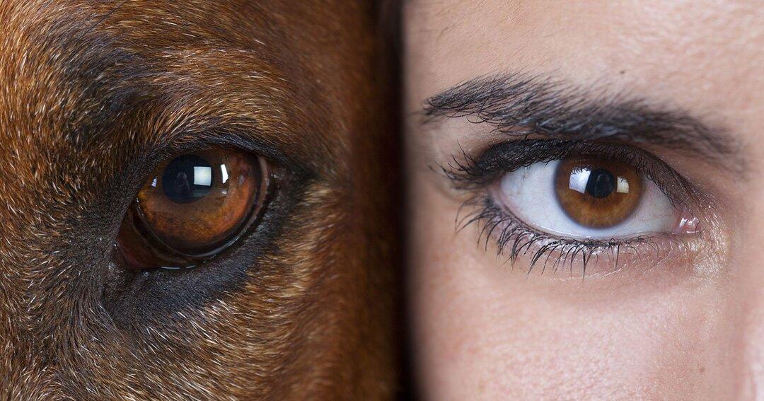 「動物と人間」を<br />区別する唯一のもの