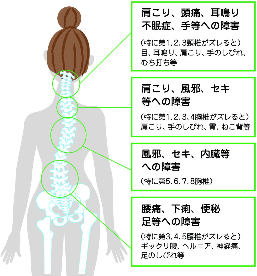 背骨がゆがんでいる人は内臓の病気になりやすい!?