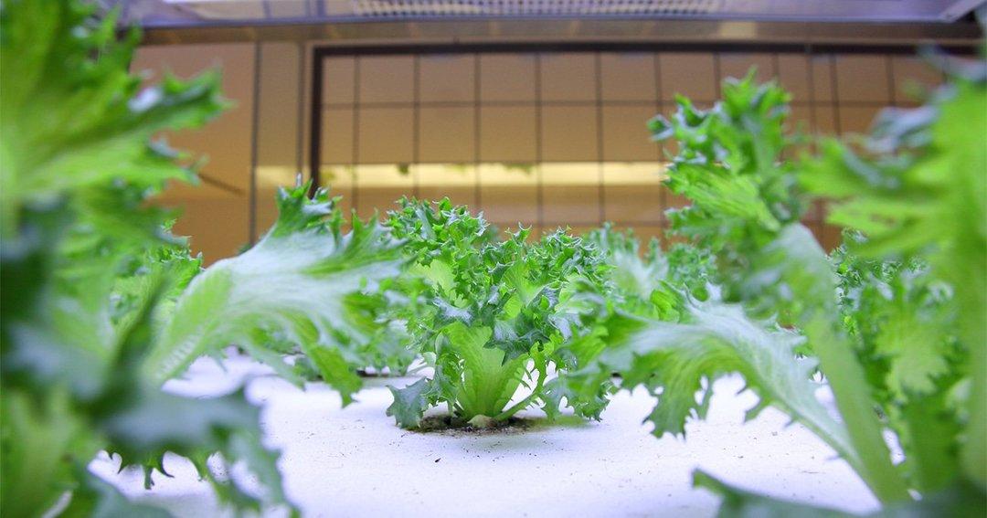 「植物工場」が普及しない本当の理由とは