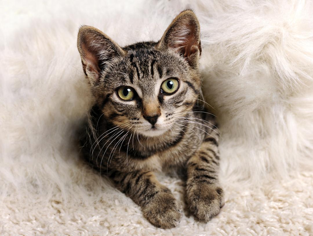 フランスでベストセラー!世界22ヵ国で翻訳!<br />なぜ人は猫を見ると話しかけたくなるのか、という謎が解けた!
