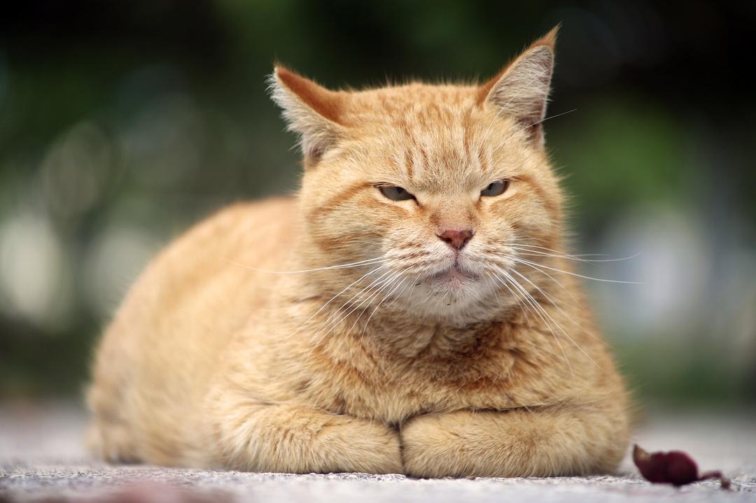 フランスでベストセラー!世界22ヵ国で翻訳!<br />猫の自分勝手な生き方は、やがては他人を幸せにする?<br />
