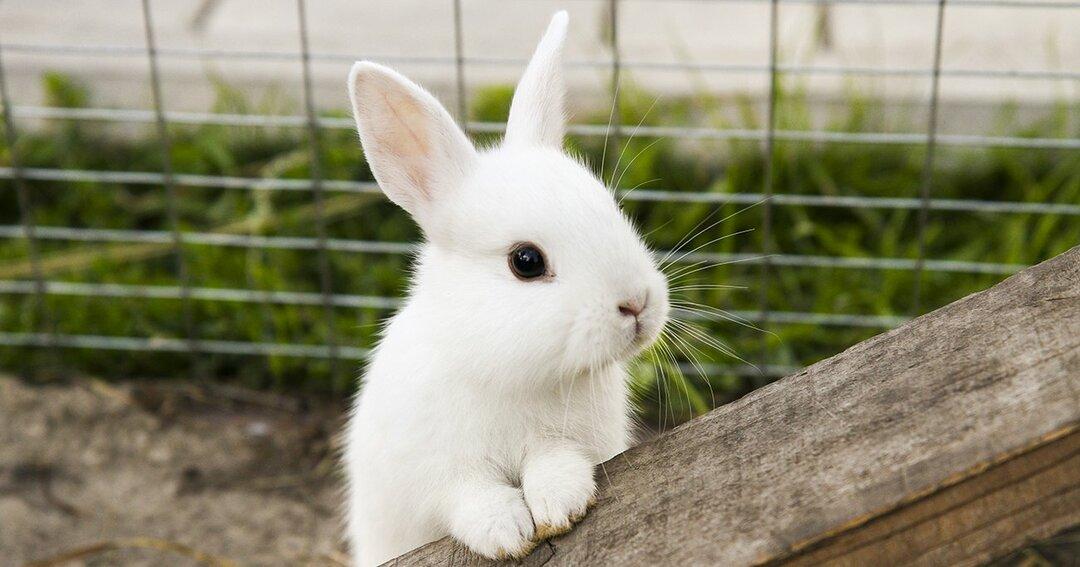 北野唯我「勝ち続ける組織を作りたいなら、ウサギの生存戦略に学べ」