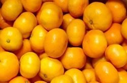 「まるな柑橘園の小粒みかん」がもらえる「佐賀県鹿島市」