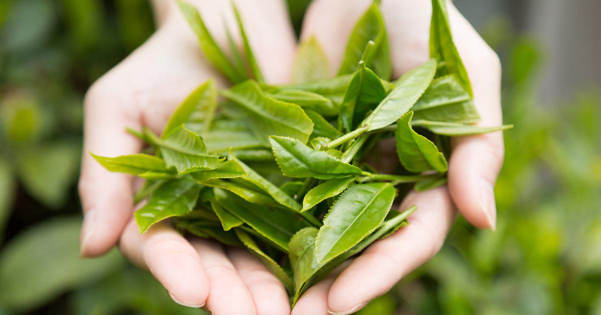 お茶や緑の葉菜類は老化を防ぐ「抗糖化作用」あり!「食事の最初」に摂るのがポイント