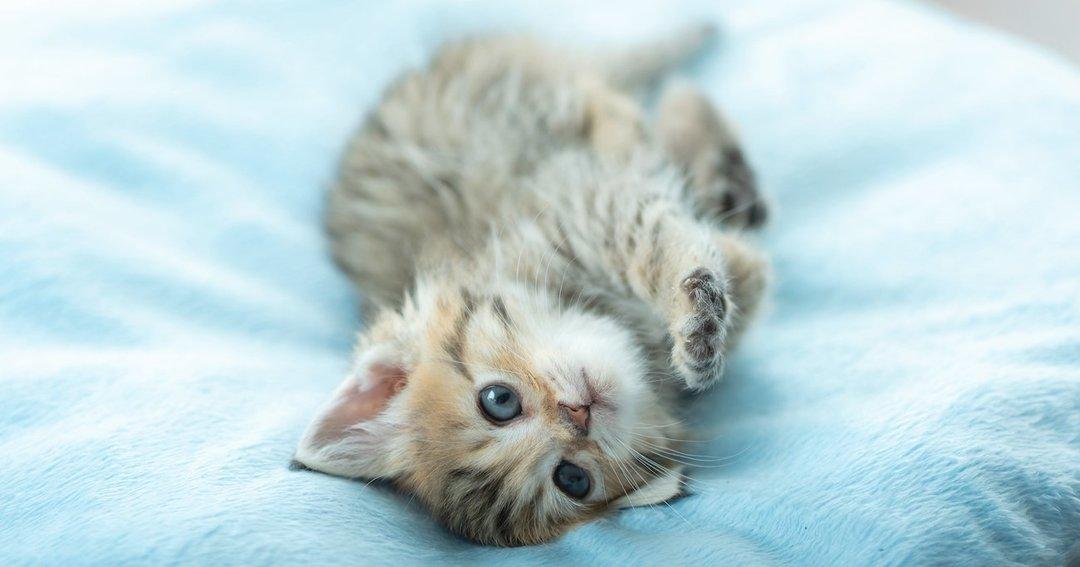 「猫だらけ」の未来がくる?コロナ禍で日本の犬・猫に異変