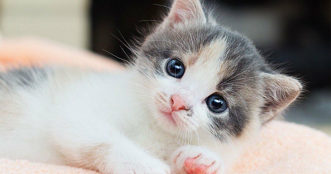 「世界の猫はざっくり何匹?」即答できたあなたは「頭がいい」!