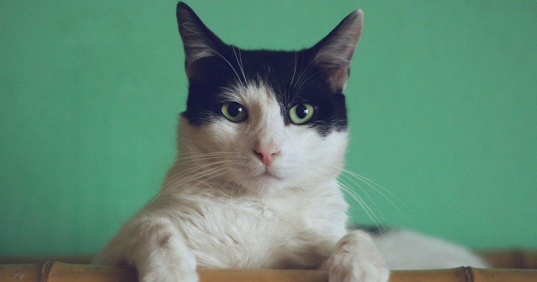 猫様のお気に召すまま、高くても「猫家具」を買ってみた飼い主の話