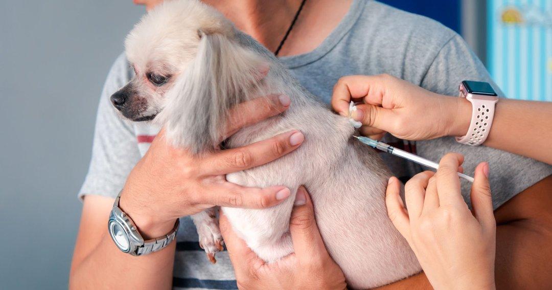 犬猫にマイクロチップ装着、日本の飼い主が抱く「体内に異物」への複雑な思い