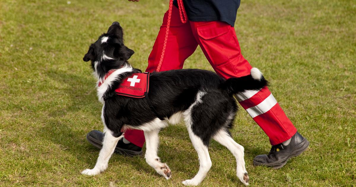 """嗅覚を失うまで行方不明者を捜し続けた""""小さな勇者""""災害救助犬が被災地で見た「とり残された弱者」の悲哀"""
