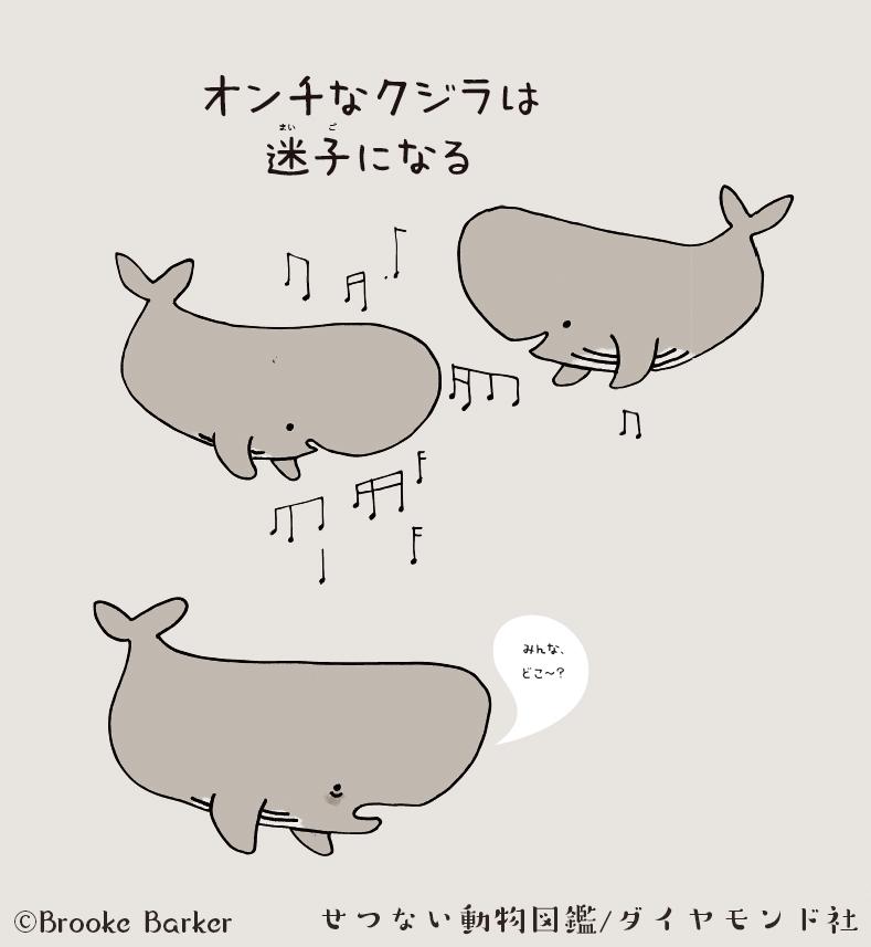 ○○が苦手なクジラは、迷子になる