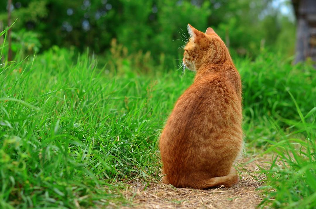 フランスでベストセラー!世界22ヵ国で翻訳!<br />なぜ人は、そこにいる猫を無視できないのか?