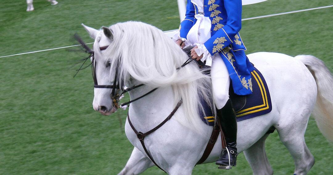 白馬と貴族
