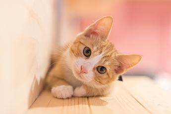 猫は自分の賢さを自覚している?