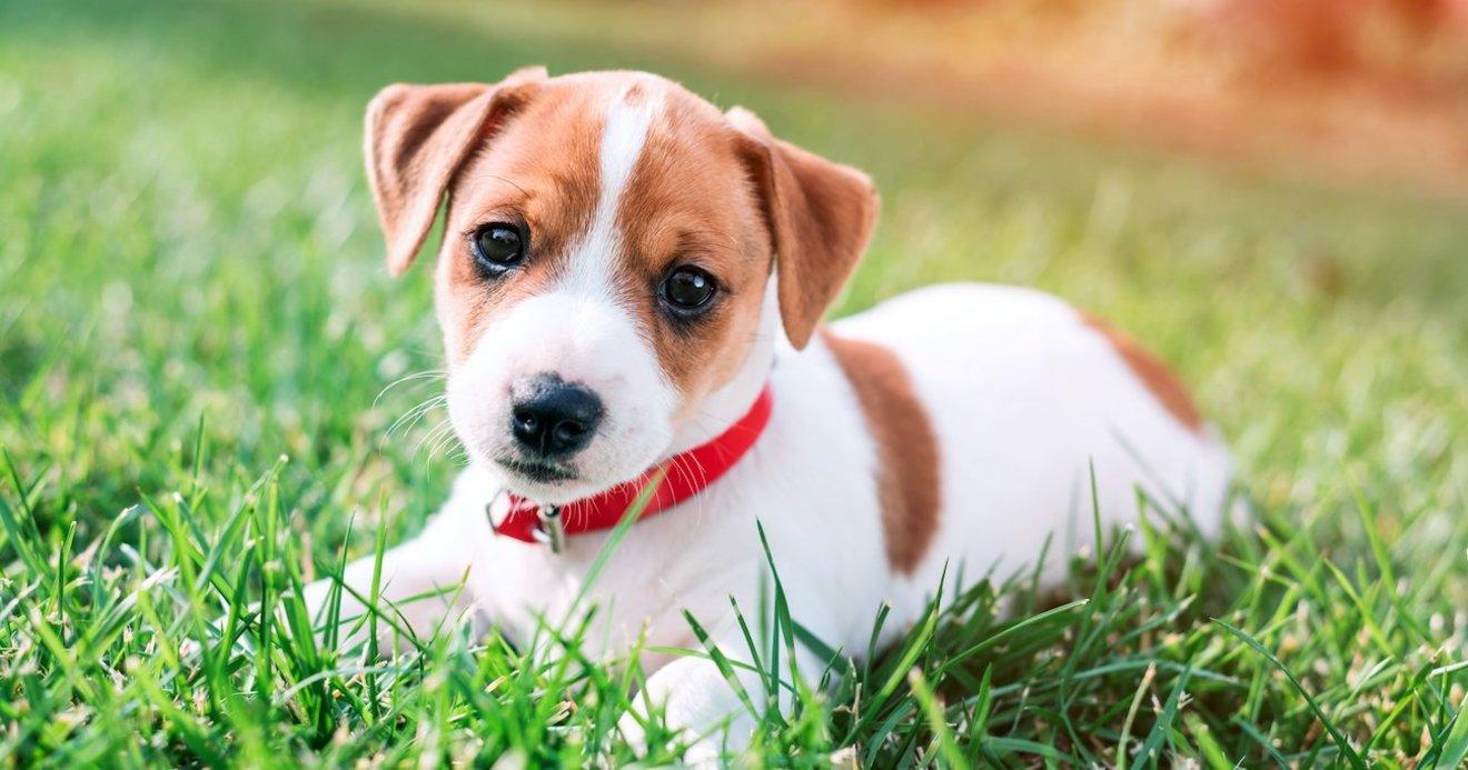 犬の年齢の新しい計算式が解明、「7倍すれば人間の年齢」は誤り ...