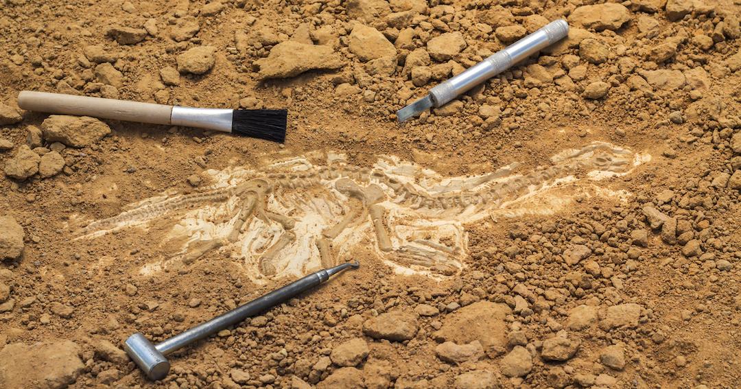 日本初の恐竜の全身骨格化石が10年かけて掘り出されるまで