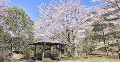 有料老人ホームランキング2019【東京都ベスト50】