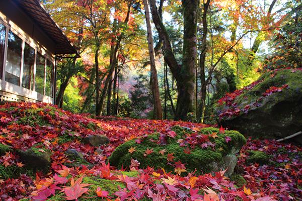紅葉も絶景な春日山原始林があり春日大 社まで徒歩数分