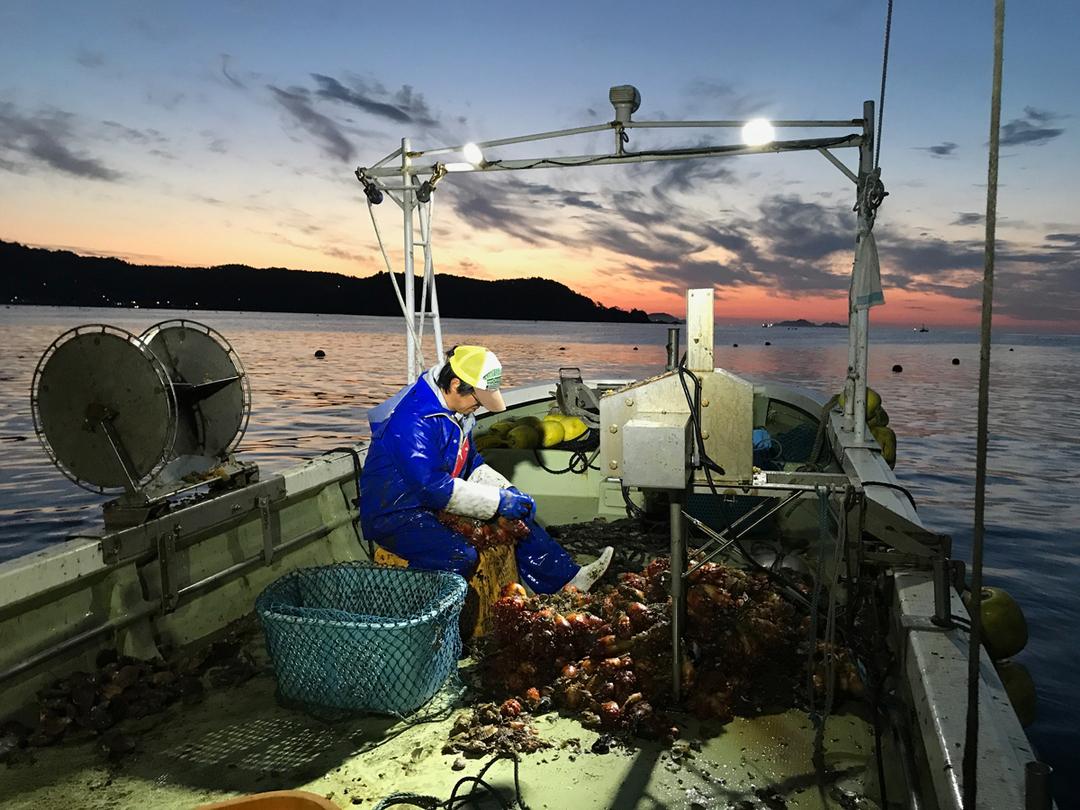 超早起き!漁師のモーニングコールサービスに応募者殺到