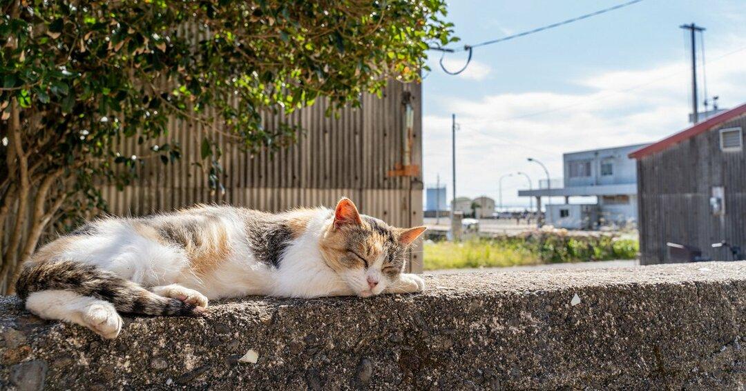夏目漱石『吾輩は猫である』の奥深さ、コロナ禍を猫目線で見つめて気づくこと