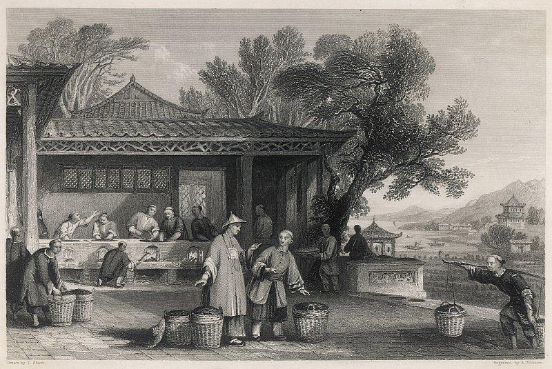 お茶の世界史…「植民地貿易」の残酷な歴史とは?