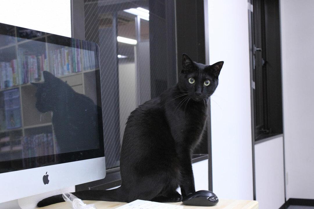 働き方改革の切り札は猫!殺伐職場を変える「ねこ社員」の実力