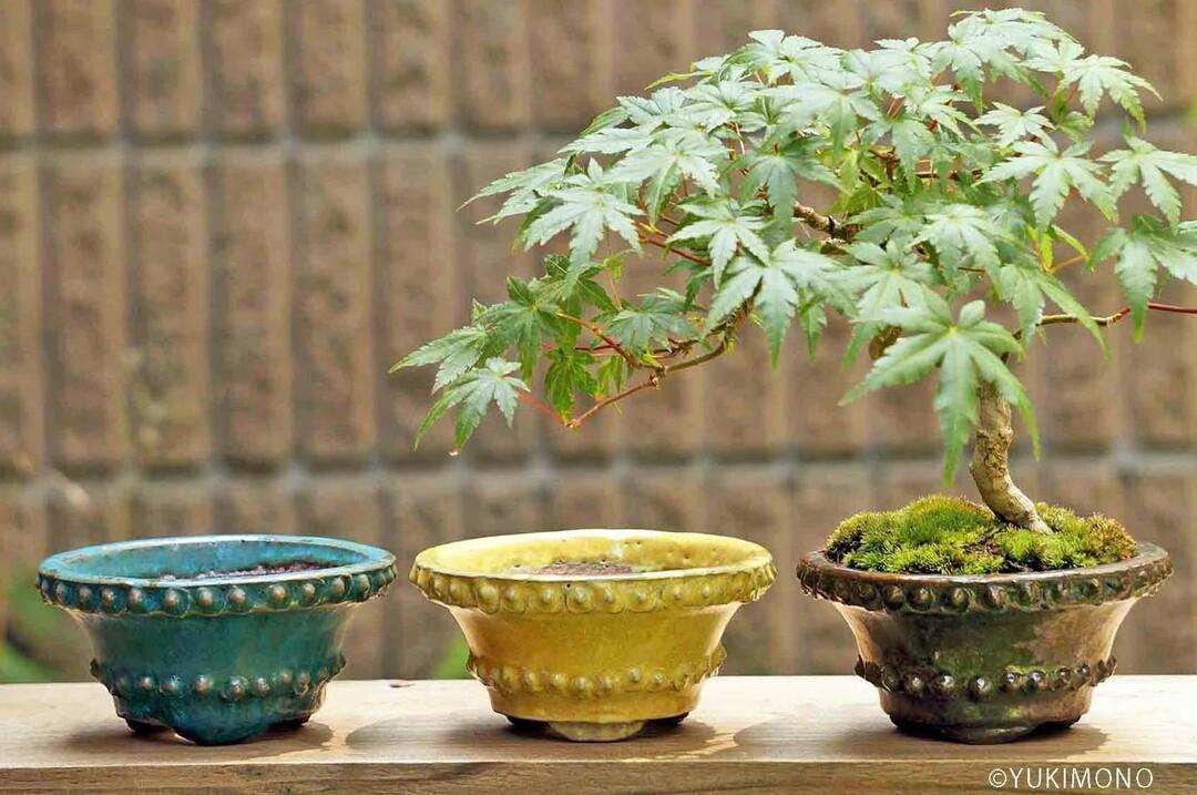 海外の「盆栽ブーム」で盆栽鉢まで大人気に!<br />日本人が忘れかけた「TOKONAME」の魅力