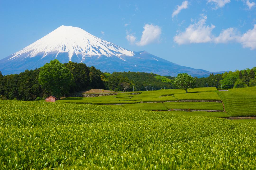 なぜ静岡県は富士山・餃子以外で他県と争わないのか