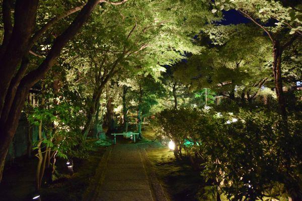 ライトアップされた圓徳院に通じる道