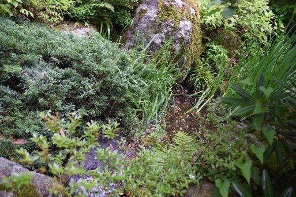 強羅花壇の川