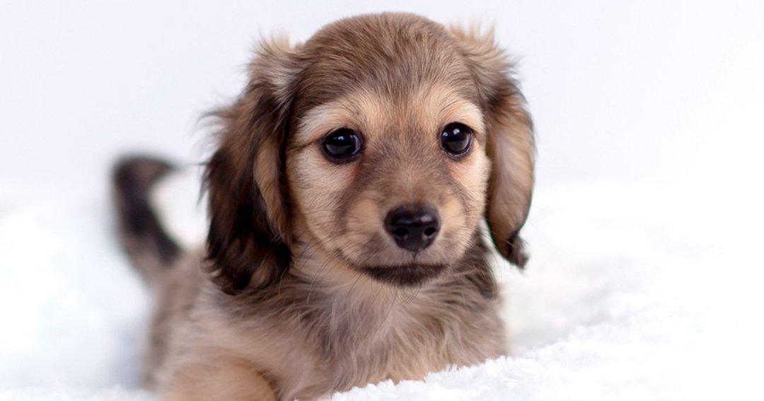 犬は人間の「わざと/わざとじゃない」行動を区別できるのか、51匹で検証