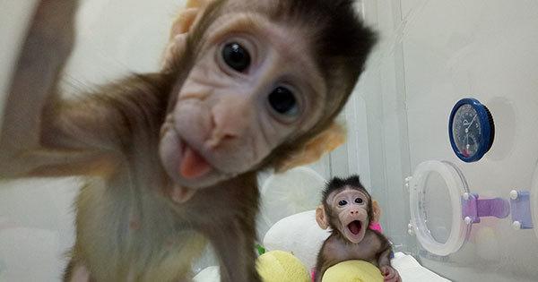 クローン猿誕生で真に危惧すべき...